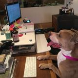 Available For Los Angeles Dog Caretaker Opportunity
