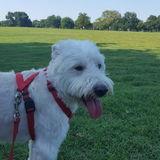 Pet Care Job in Midland
