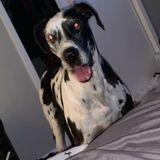 Mckinney Dog Walker Available For Job Opportunities