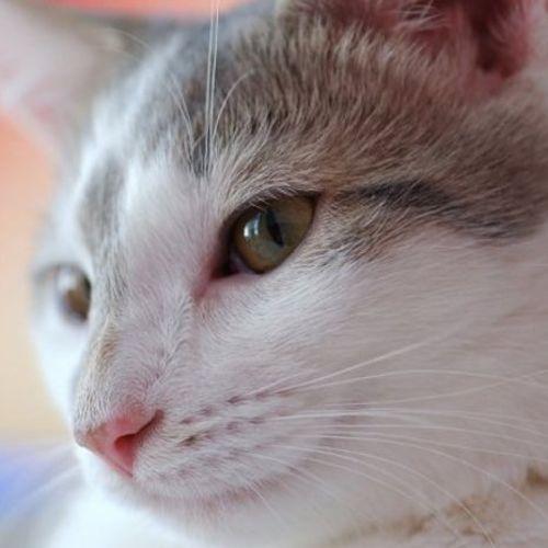 Pet Care Job Jd I's Profile Picture