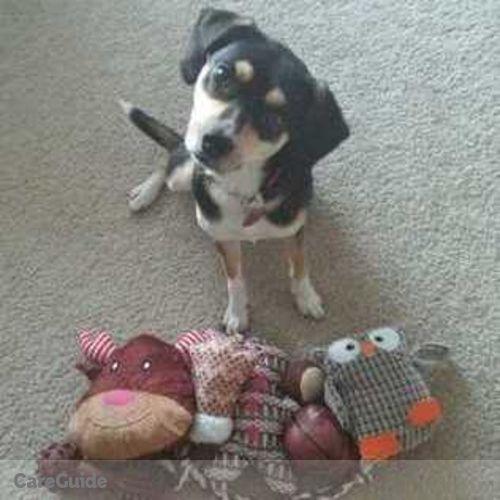 Pet Care Provider Sammi Antonaci's Profile Picture