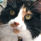 Looking for care for our family of 7 cats