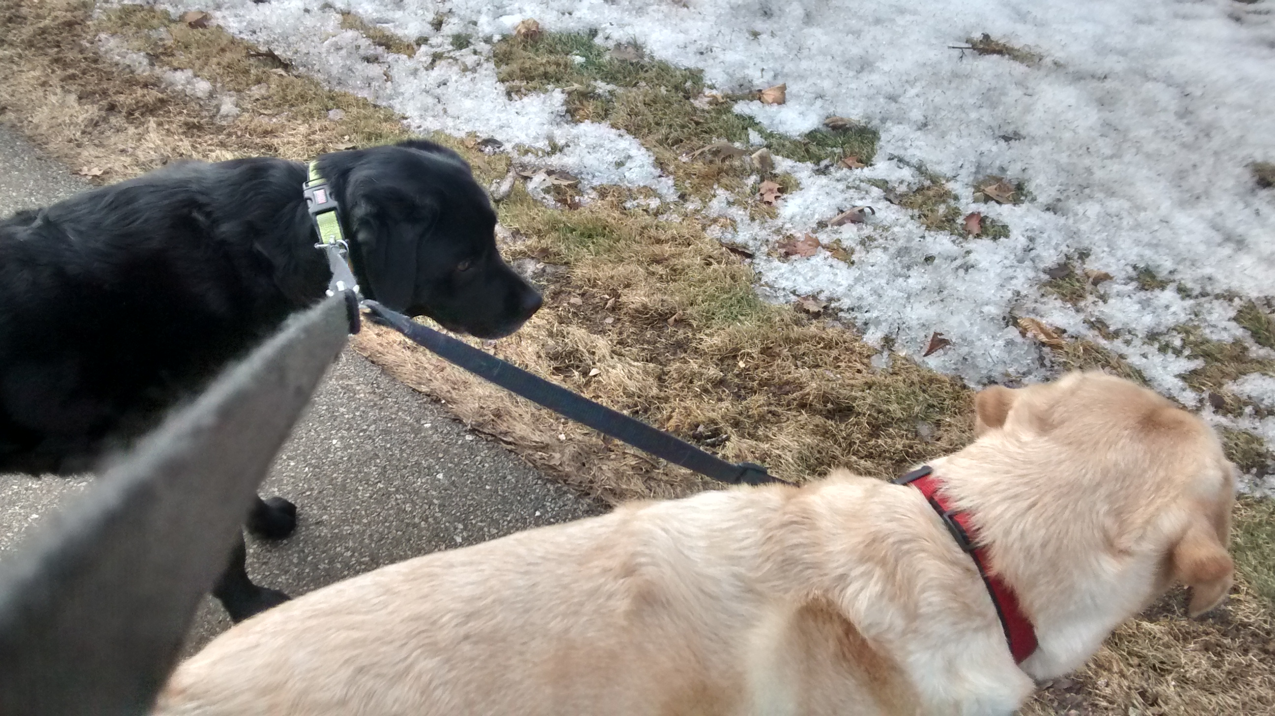 Dog Walker, Pet Sitter in Wauconda
