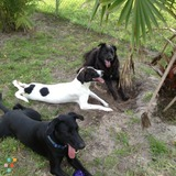 Pet Sitter in Cape Coral