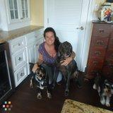Dog Walker, Pet Sitter in Rockport