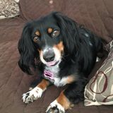 Helping Hands Pet Sitter-Insured and Bonded! CPR and First aid certified