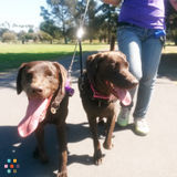 Dog Walker in Pinole