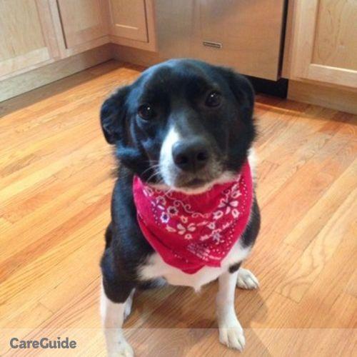 Pet Care Provider Sarah Roderiques's Profile Picture
