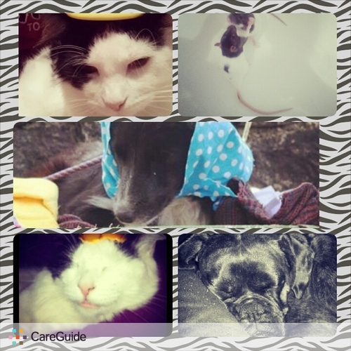 Pet Care Provider Raisa Longworth's Profile Picture