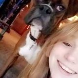 Pet Sitting/ Dog Walking Offered in Des Plaines