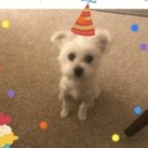 Pet Care Job Mona Siddick's Profile Picture