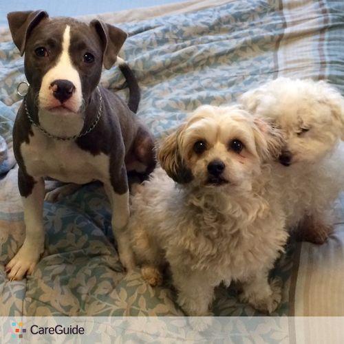 Pet Care Provider Karen M's Profile Picture