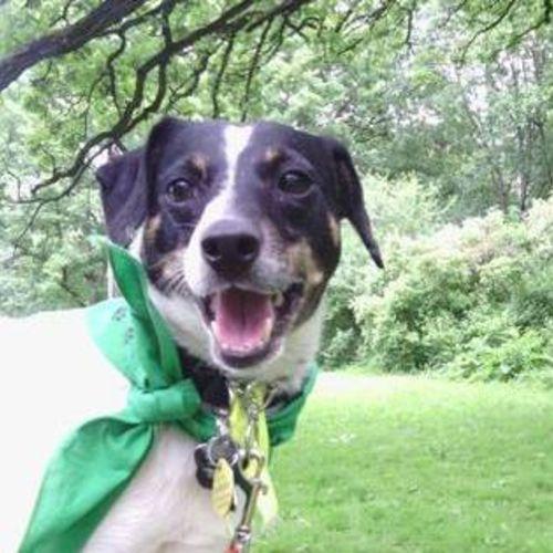 Pet Care Job Allison Hadley's Profile Picture