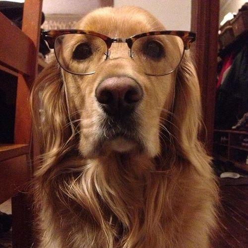 Pet Care Provider Shane Ferrigan Gallery Image 1