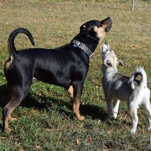 Pet Care Provider Amanda R Gallery Image 2