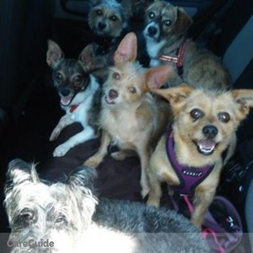 Pet Care Provider Wigglin' Waggin' W's Profile Picture