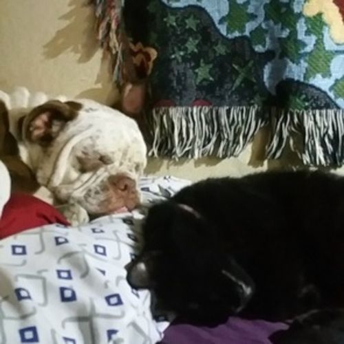 Pet Care Provider Gillian & Matt R Gallery Image 2