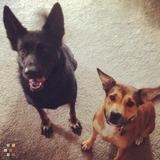 Dog Walker, Pet Sitter in Ann Arbor