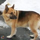 Dog Walker, Pet Sitter in Stafford