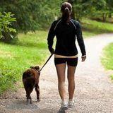 Dog Walker, Pet Sitter in Northbrook