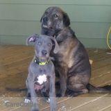 Dog Walker Job, Pet Sitter Job in Spruce Grove