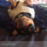 Dog Walker, Pet Sitter in Ventura
