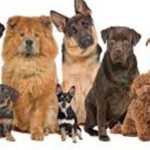Pet Care Provider Sasha&Carolyn X's Profile Picture