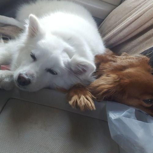 Pet Care Provider Kaisea Simmons Gallery Image 1
