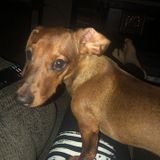 Sitter needed for brief House call checkup on Dotson puppy. Please Help!