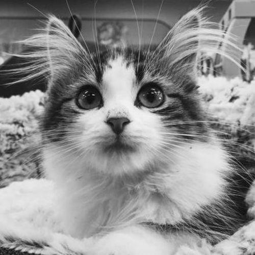 Pet Care Provider Vonny P's Profile Picture