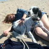 Dog Walker, Pet Sitter in Belmont