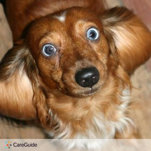 Pet Care Provider Kristina C's Profile Picture
