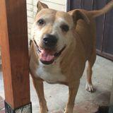 Dog Walker, Pet Sitter in East Los Angeles