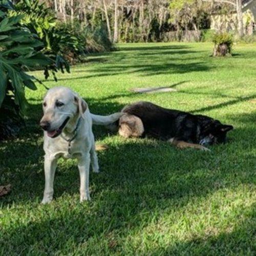 Pet Care Job Johanna Karr's Profile Picture