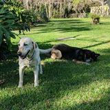 Pet sitter needed in Rockledge