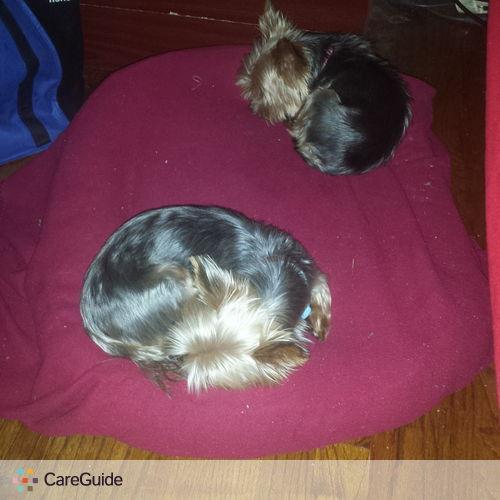 Pet Care Provider Jair Alexander M's Profile Picture