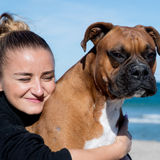 Friendly easy going Boxer momma, your pet guardian:)