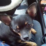 Dog Walker, Pet Sitter in Palm Harbor