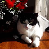 Looking for sincere cat lover