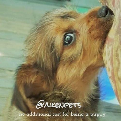 Pet Care Provider Eric Tyburski Gallery Image 1