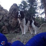 Pet Sitter Job in Colorado Springs
