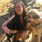 Dog Walker, Pet Sitter in Rockville