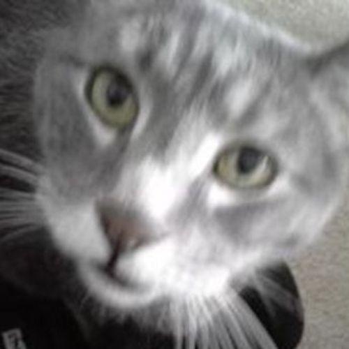 Pet Care Job Jazmin Smith's Profile Picture
