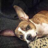 Taunton Pet Carer Looking For Work in Massachusetts