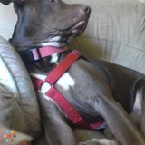 Dog Walker, Pet Sitter in Goodyear