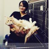 Entrust your pets with a veterinary professional !