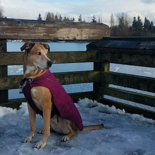 Pet Care Job Joshua S's Profile Picture
