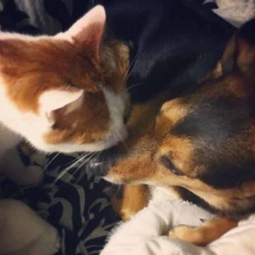 Pet Care Provider Jennifer Kruzman Gallery Image 1