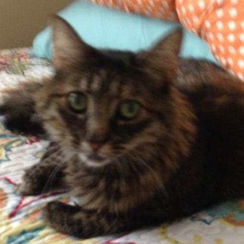 Pet Care Job Mary Thibodeau's Profile Picture