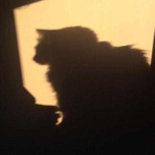 Pet Care Provider Alison Sanfilippo's Profile Picture